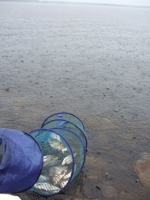 дубна дамба рыбалка