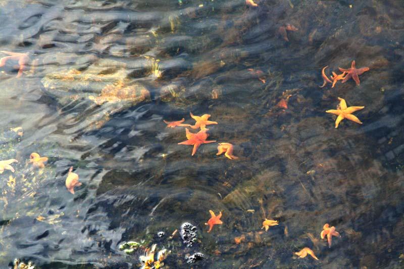 10-starfishnm