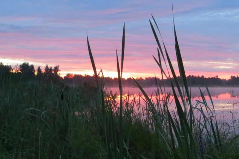 ловля амура в сентябре на пруду