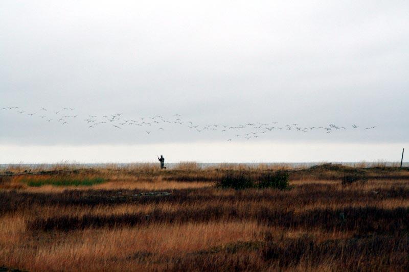 26-goose-huntnm